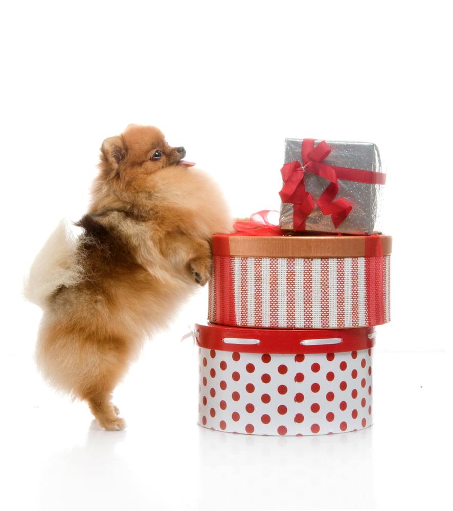 Evcil Hayvanı Olanlara Alınabilecek En Güzel Hediyeler