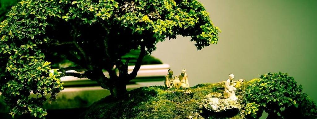 mini-bahçeler-bonsai-ağacı