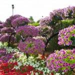 En Güzel Çiçekler ve Anlamları