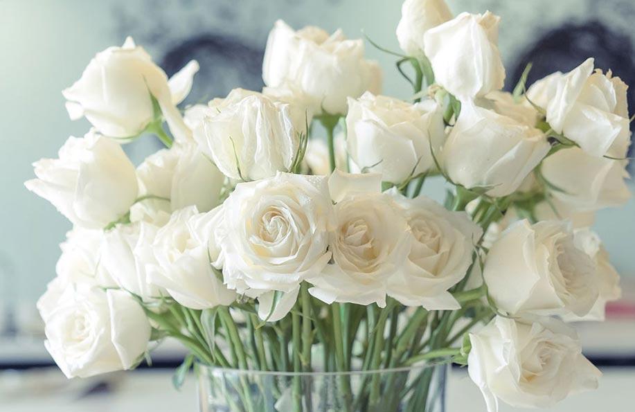 beyaz çiçeğin anlamı