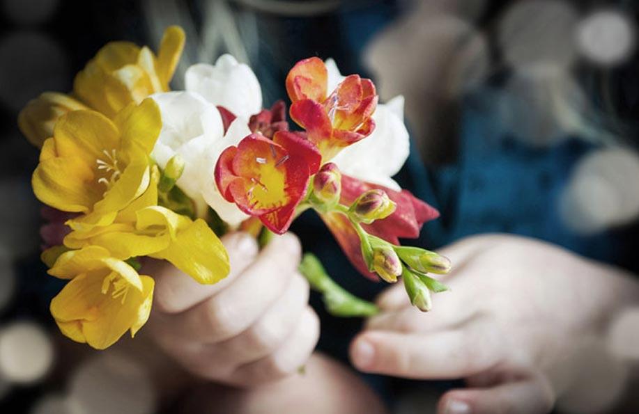 frezya çiçeği anlamı