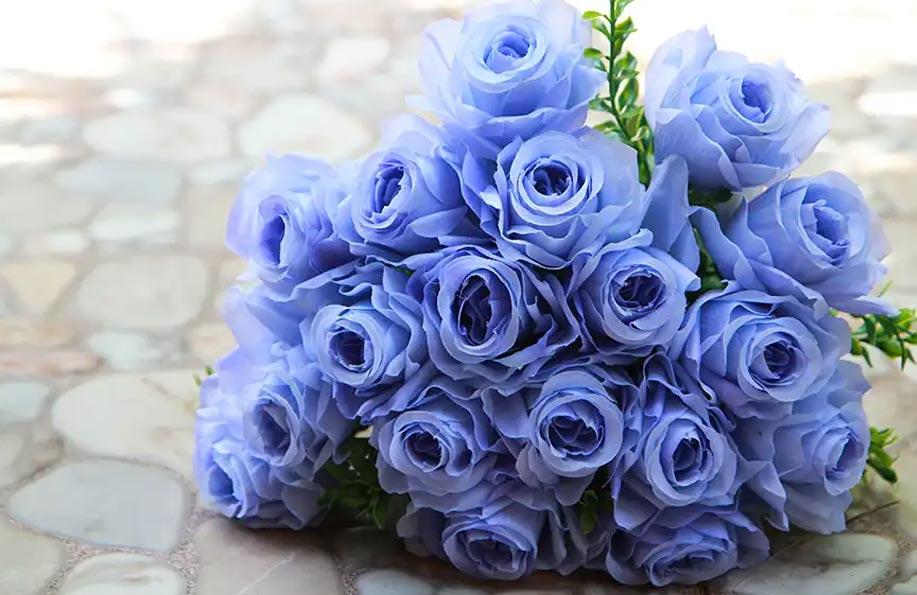 mavi çiçeğin anlamı