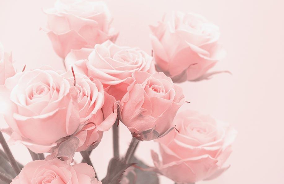 pempe çiçeğin anlamı