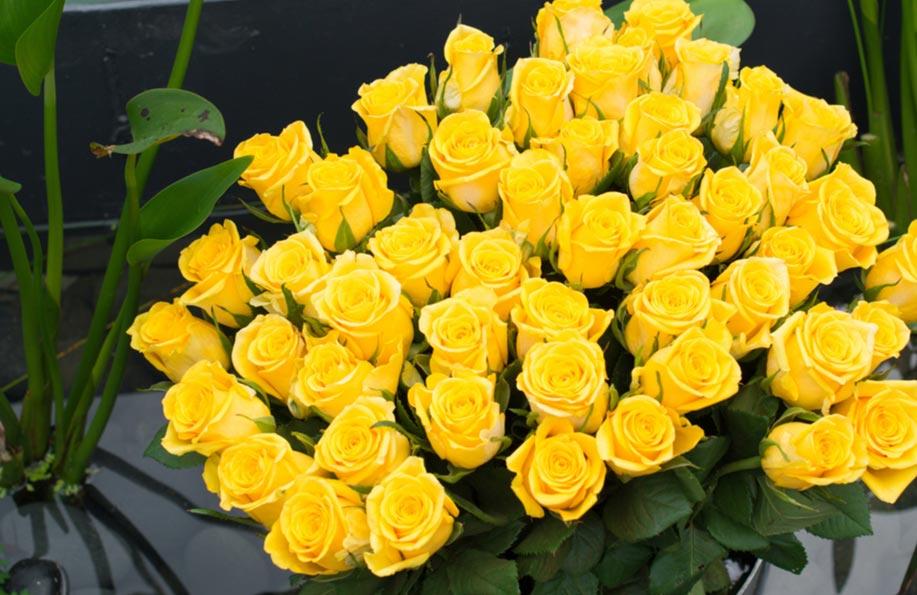 sarı çiçeğin anlamı