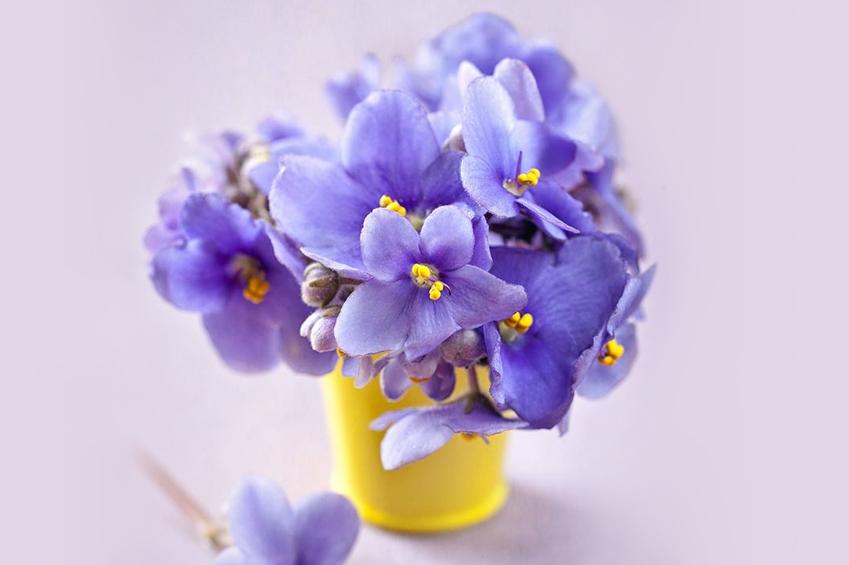 canlı ev çiçekleri