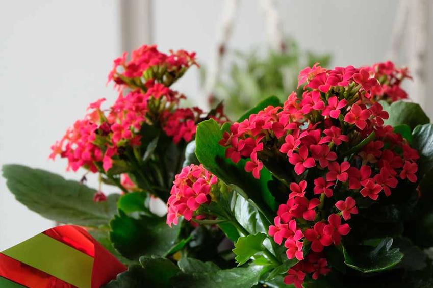 ev çiçek çeşitleri