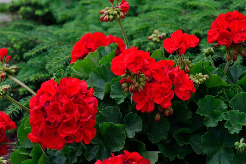 ev çiçek resimleri