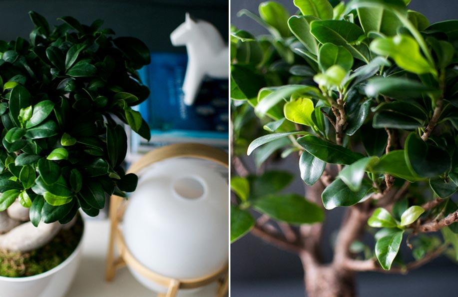 bonsai bakımı nasıl yapılır