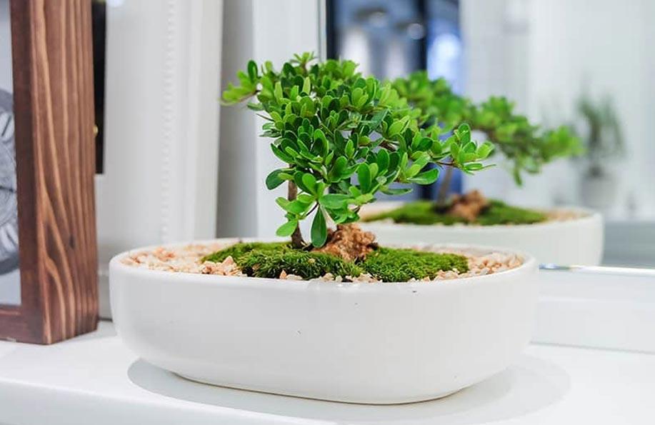 bonsai çeşitleri