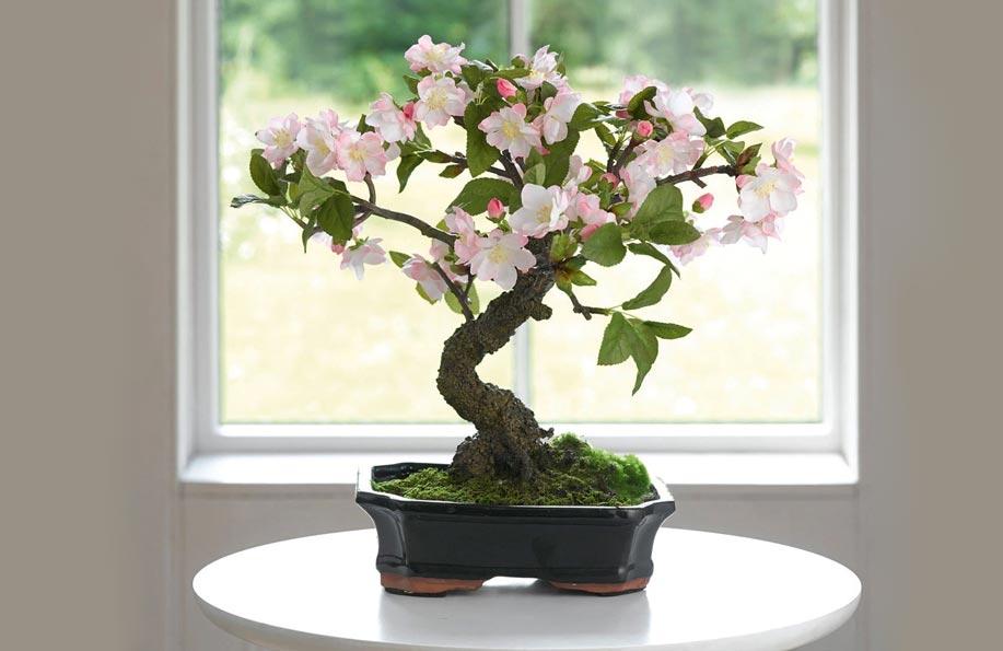 bonsai çiçek açar mı