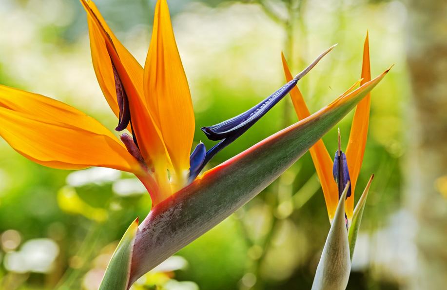 cennet çiçeklerinin isimleri