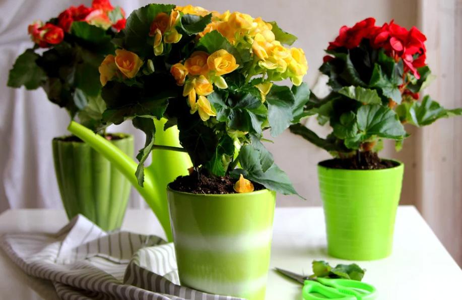 çiçek isimleri ve çeşitleri