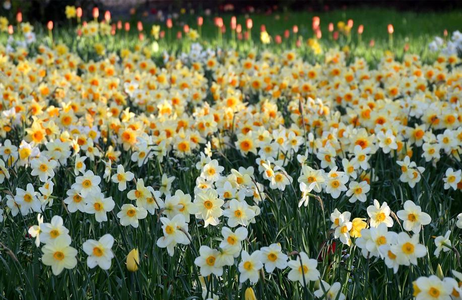 en güzel çiçek isimleri