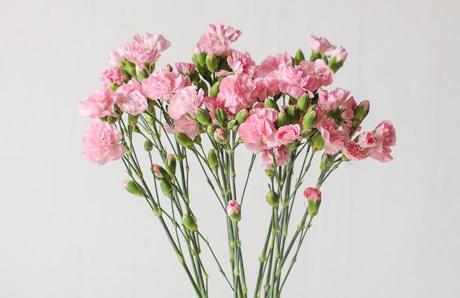 ev çiçekleri isimleri