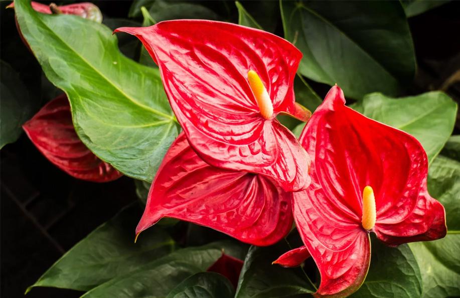 saksı çiçeklerinin isimleri
